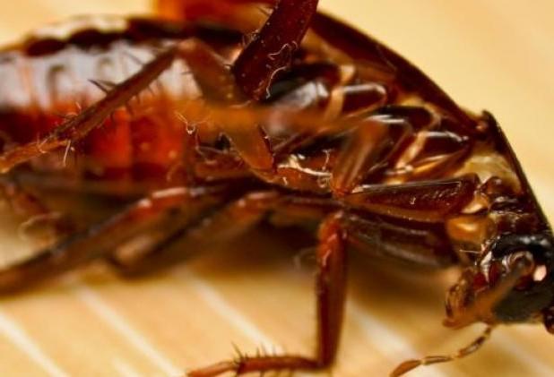 Απαλλαγείτε από τις κατσαρίδες με αυτούς τους τρεις φυσικούς τρόπους