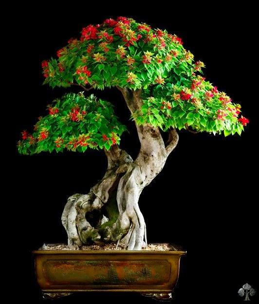 bonsai wallpaper 03 ndash - photo #33