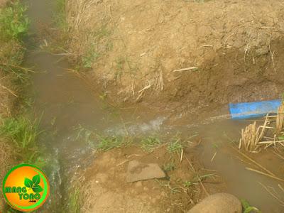 Air dari pompa dialirkan ke parit