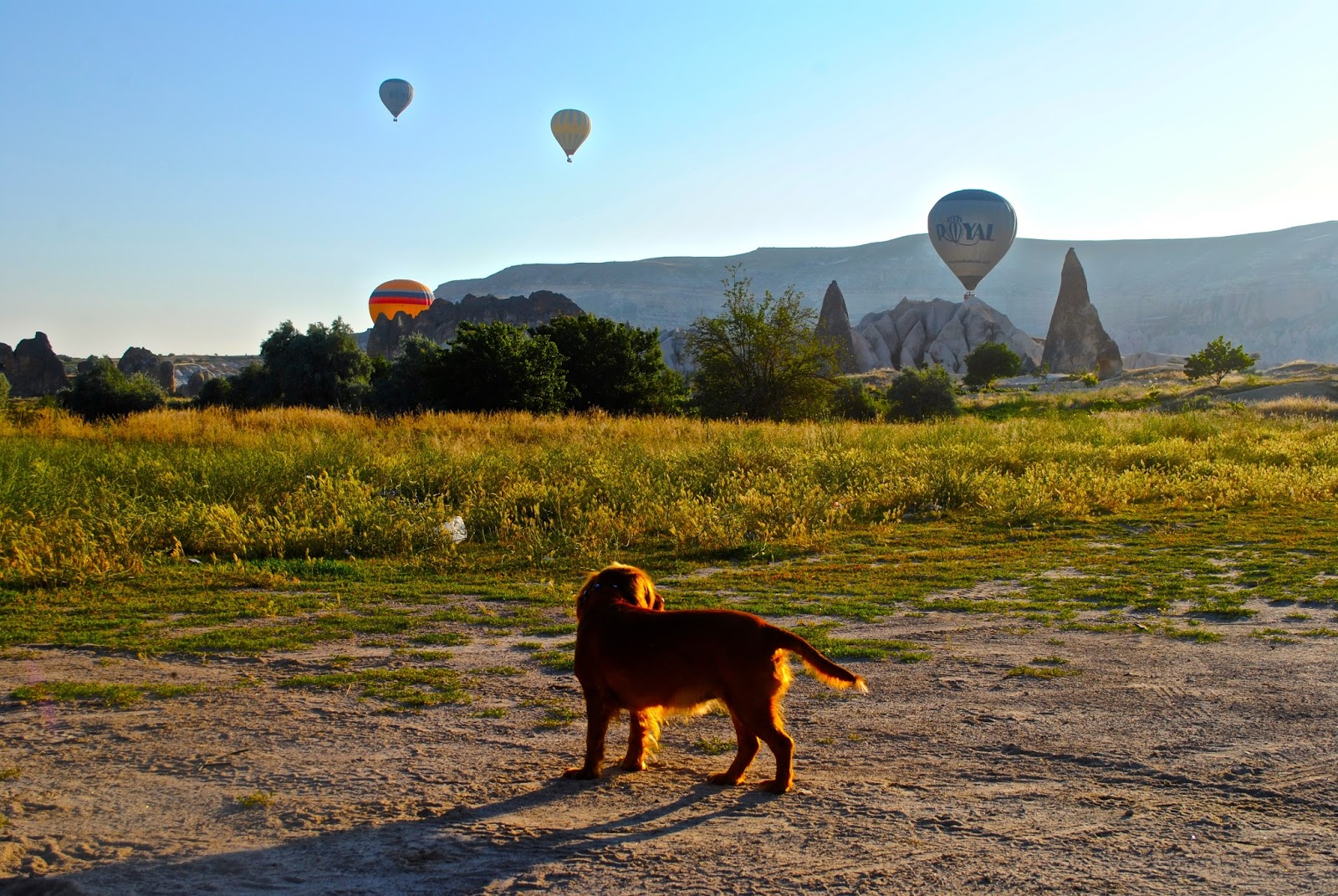 Hot Air Ballooning over Goreme Cappadocia at Sunrise with Butterfly Balloons