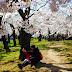 梦想国度 - 日本东京+北海道五月黄金周赏樱之旅
