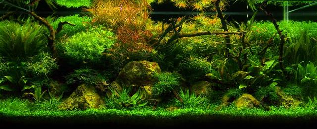 Pasión por los acuarios