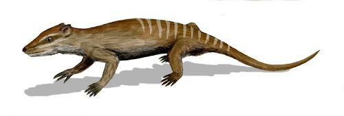 replica de mamiferos del cretaceo Yanaconodon
