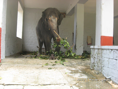 Elephant shed 2, Sringeri in Karnataka