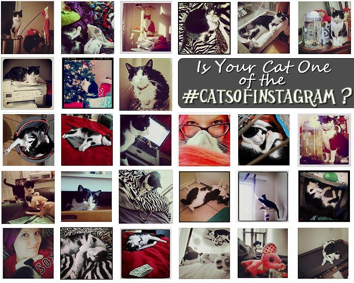 Re-Pin if your cat is one of the #CatsOfInstagram! #GoodlifePet #Shop #Cbias