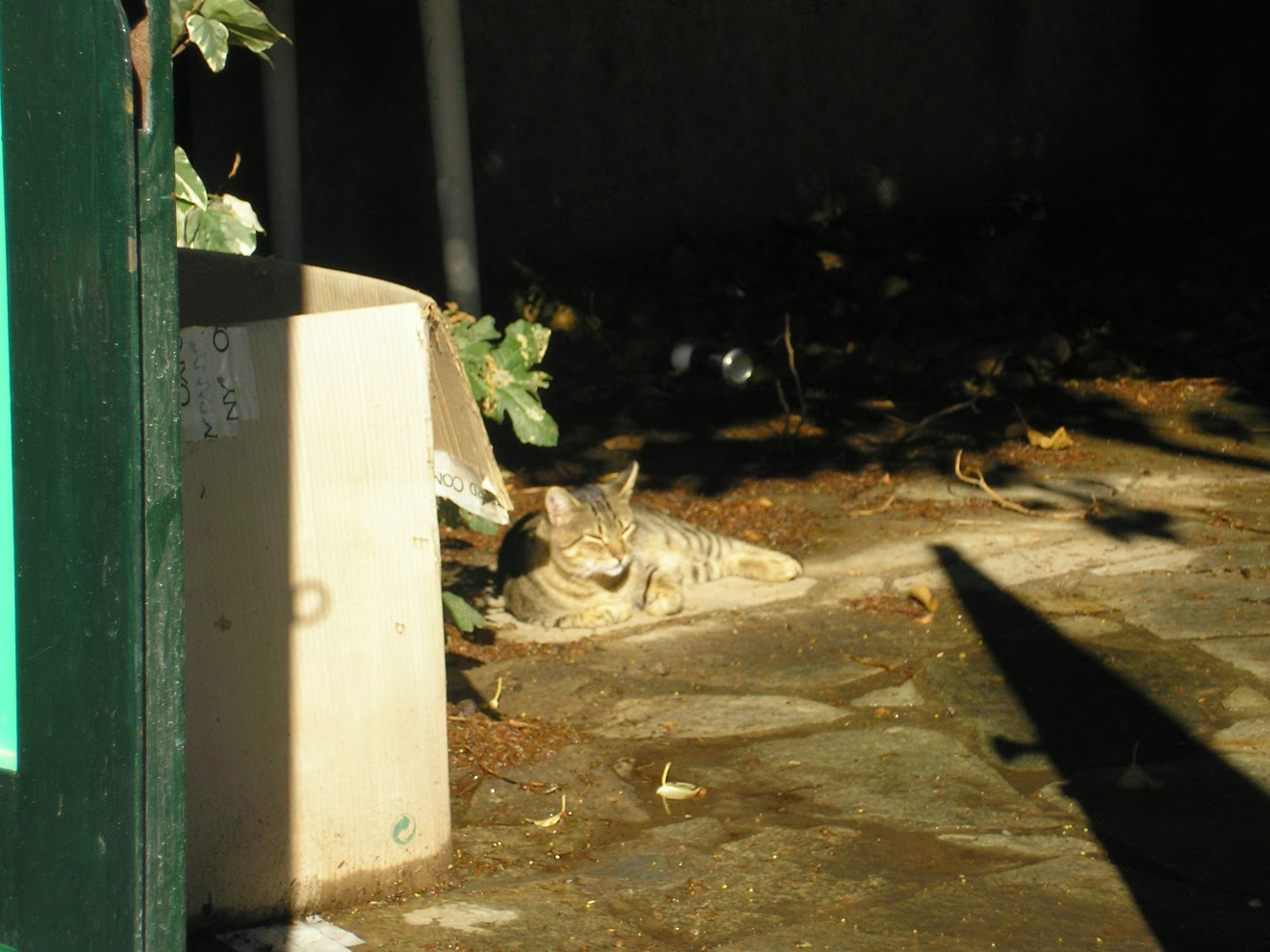 Коты Крита