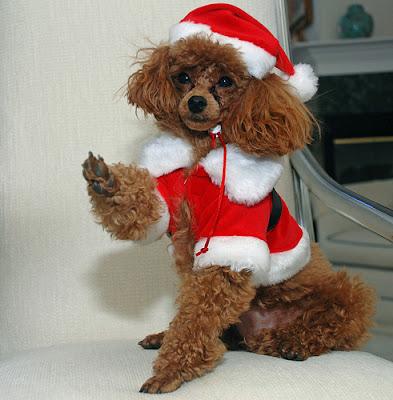 Perro+con+traje+de+Santa+Claus Imagenes chistosas de perros navideño
