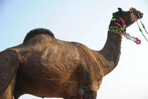arte-camello-5.jpg