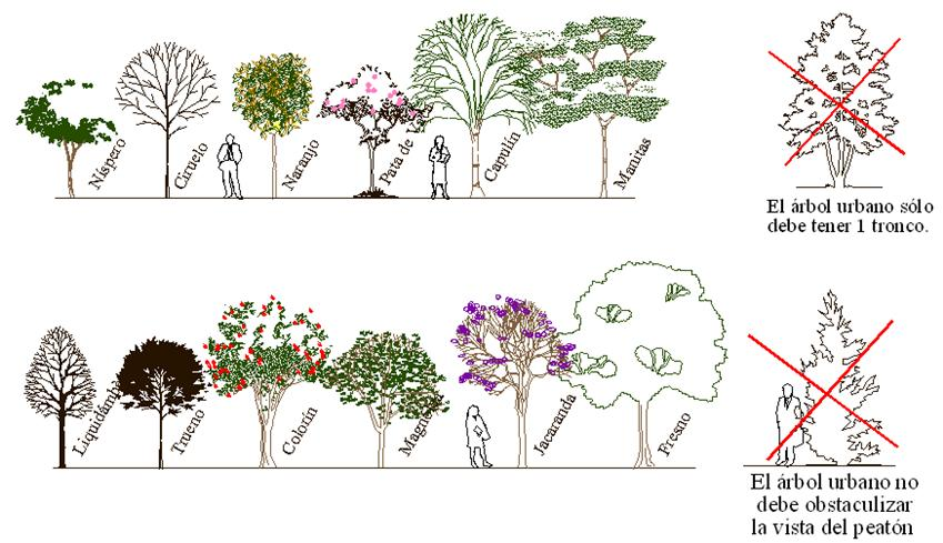 Arboricultura urbana urban arboriculture for Lista de arboles frutales de hoja perenne