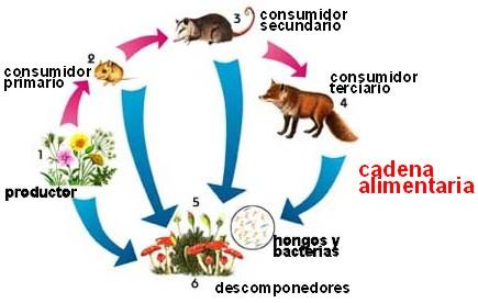 Cadena Alimenticia - Ciencias Naturales BY