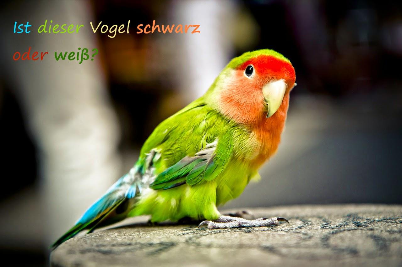 """Foto von einem bunten Papagei mit dem Text """"Ist dieser Vogel schwarz oder weiß?"""""""