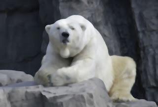 Gus: The Polar Bear From Central Park