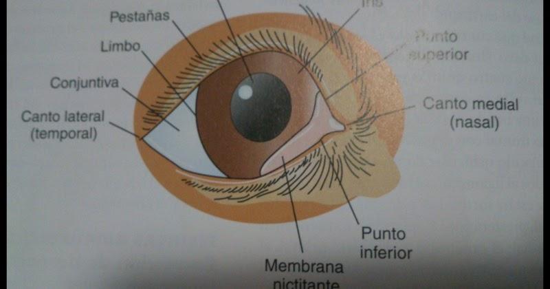 La operación cosmética las bolsas en los ojos