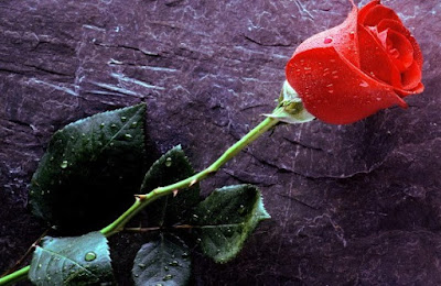 happy-rose-day-images-for-whatsapp