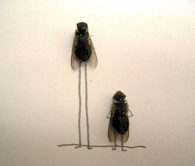 foto unik lalat