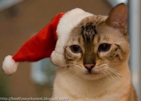 Cat in red cap.