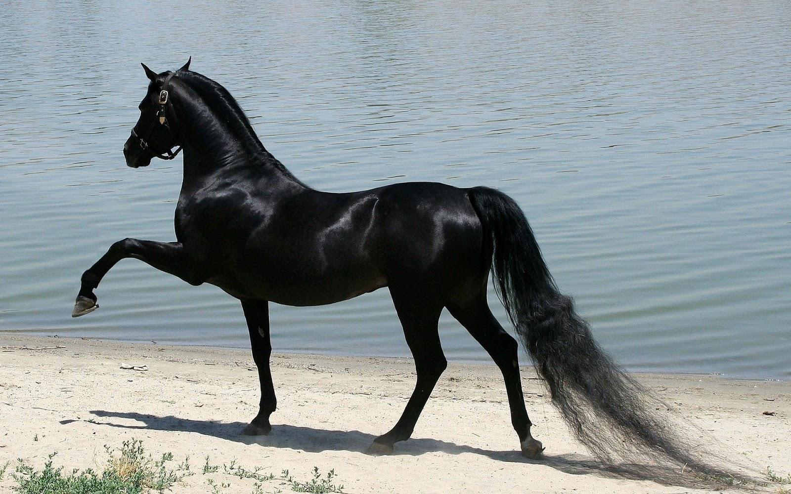 Amazing   Wallpaper Horse Nature - %251+beautiful+horse+wallpaper+(3)  Collection_46378.jpg