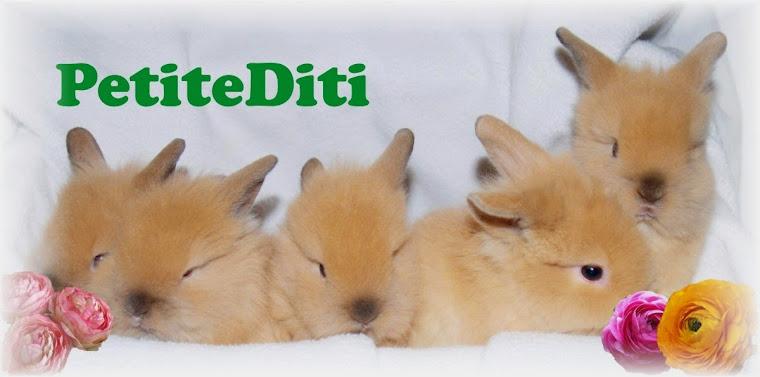 PetiteDiti