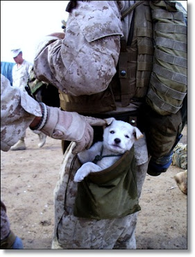 ".""Real Men ""Don&#39;t"" Make Dogs Fight!"".. ~~ ""They Do It For Them!""~~ ""God Bless Alpha Co. 1st"