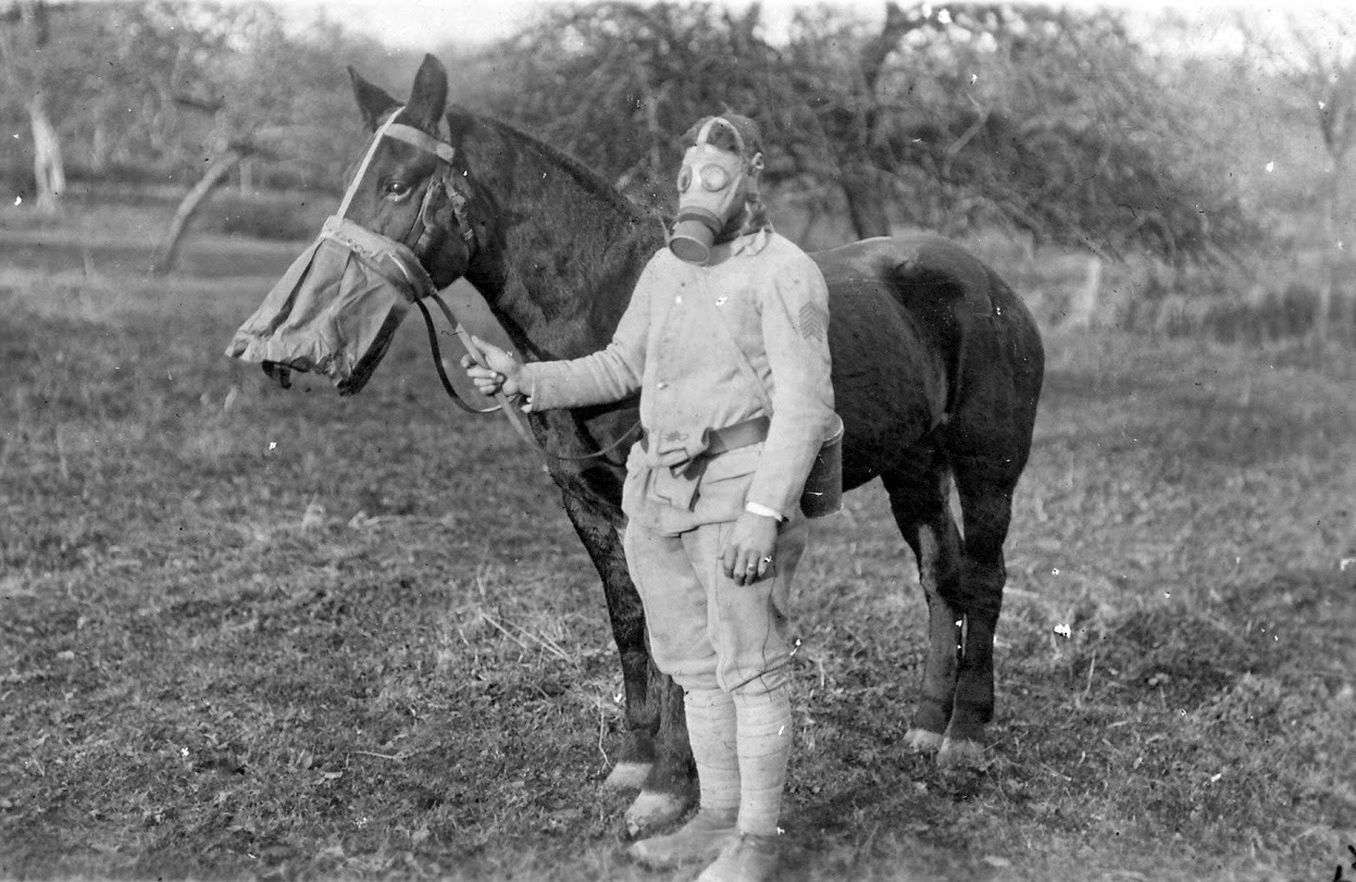 warhorse world war i A new memorial is being unveiled near ascot racecourse today paying tribute to  the animals that served so bravely during the first world war.