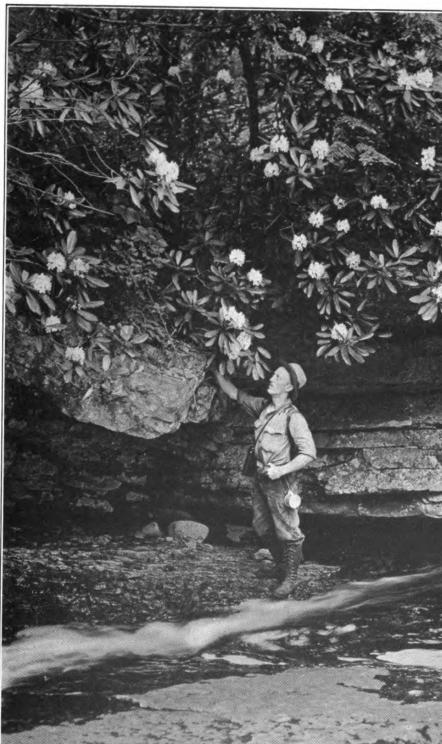 Arthur O. Friel admiring some flowers