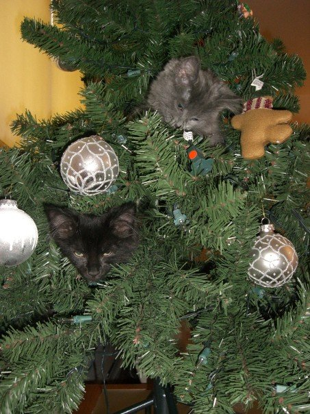 Kittens in tree, Cats in tree, Kittens in Christmas Tree