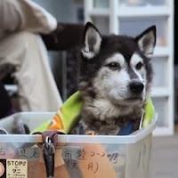 tratar com respeito cachorro velhote