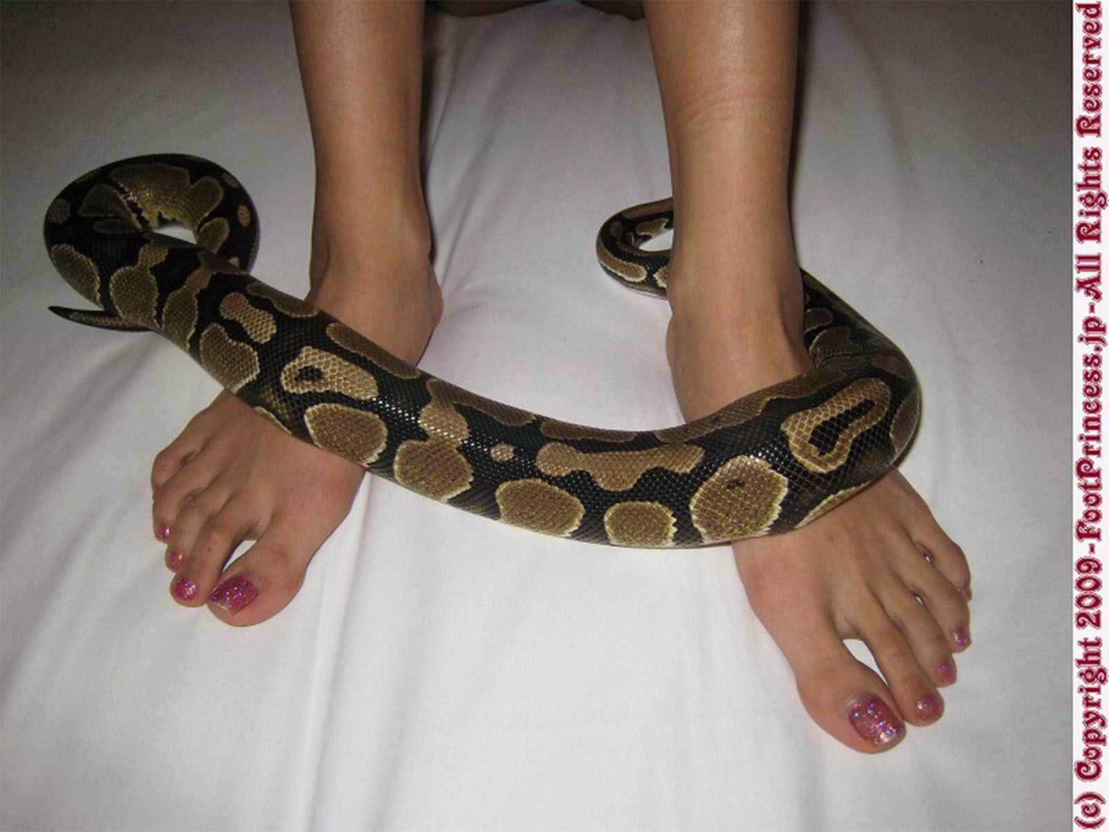 Mascota masajea mis pies