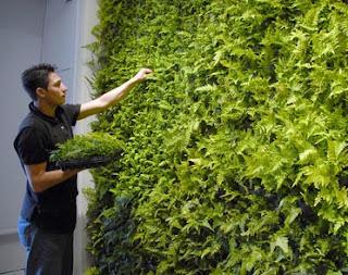 Cara buat Green wall sederhana di rumah