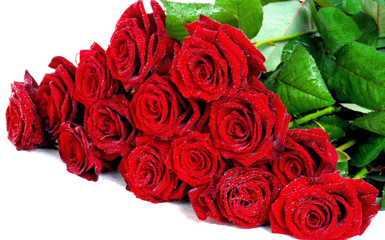 Love\'s foolish cycle: Flower Color Symbolism