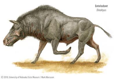 entelodontidae Dinohyus