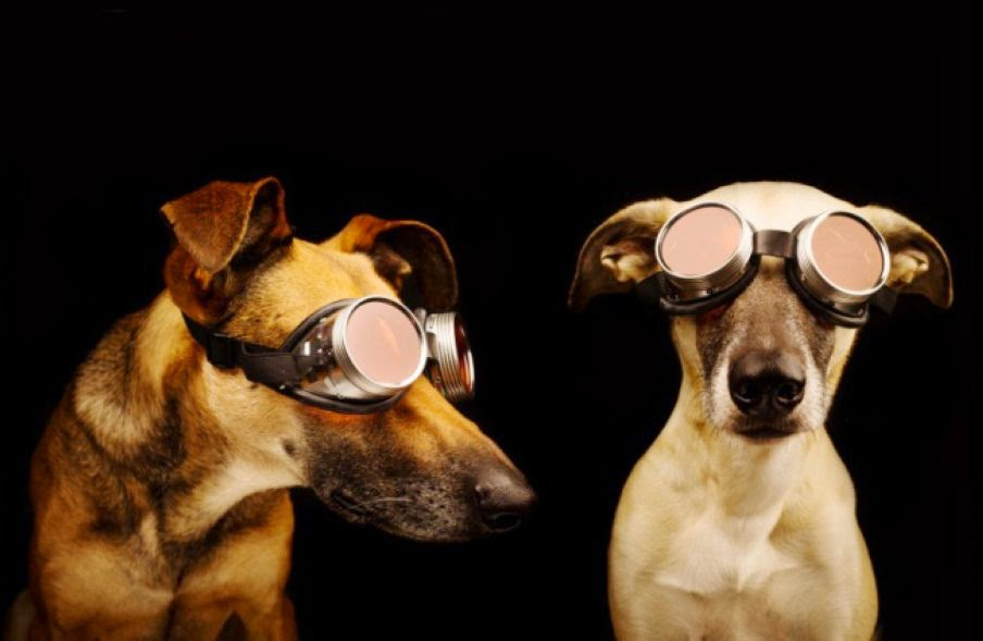 Dogs in 3D Glasses