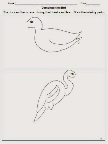 Bird adaptations- worksheet to draw missing beak and feet of duck & heron