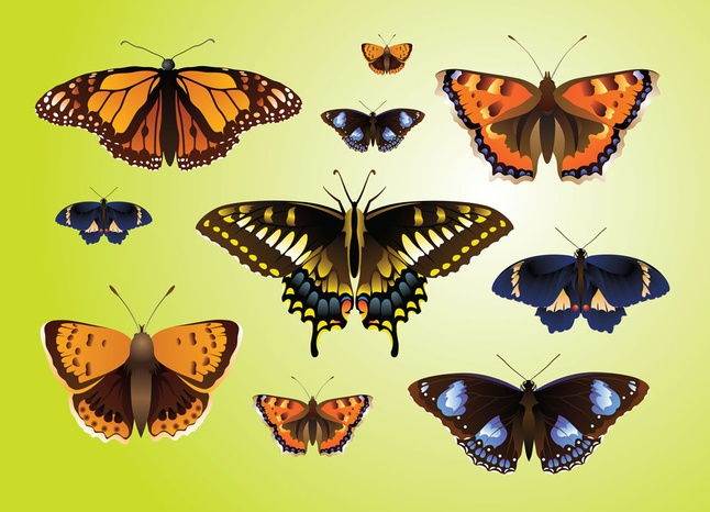 Free Realistic Butterfly Vectors Graphics
