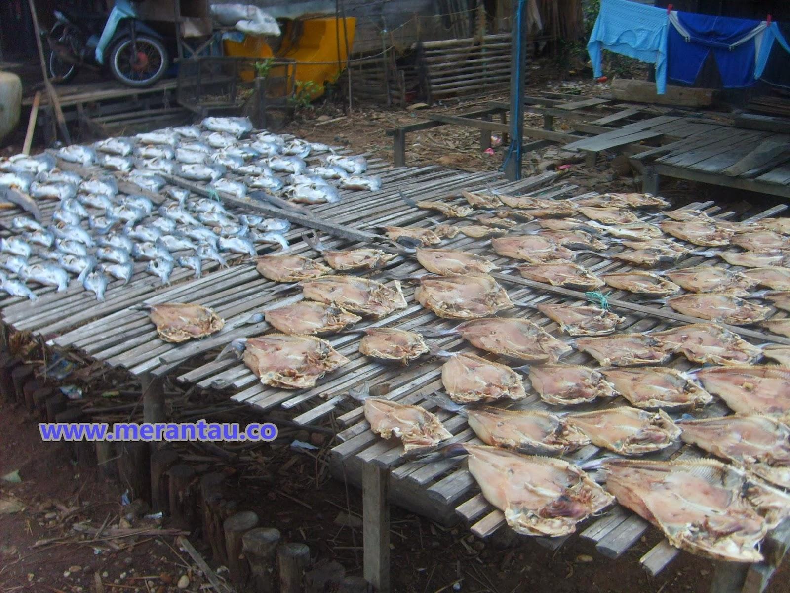 produksi ikan asin kuala lupak