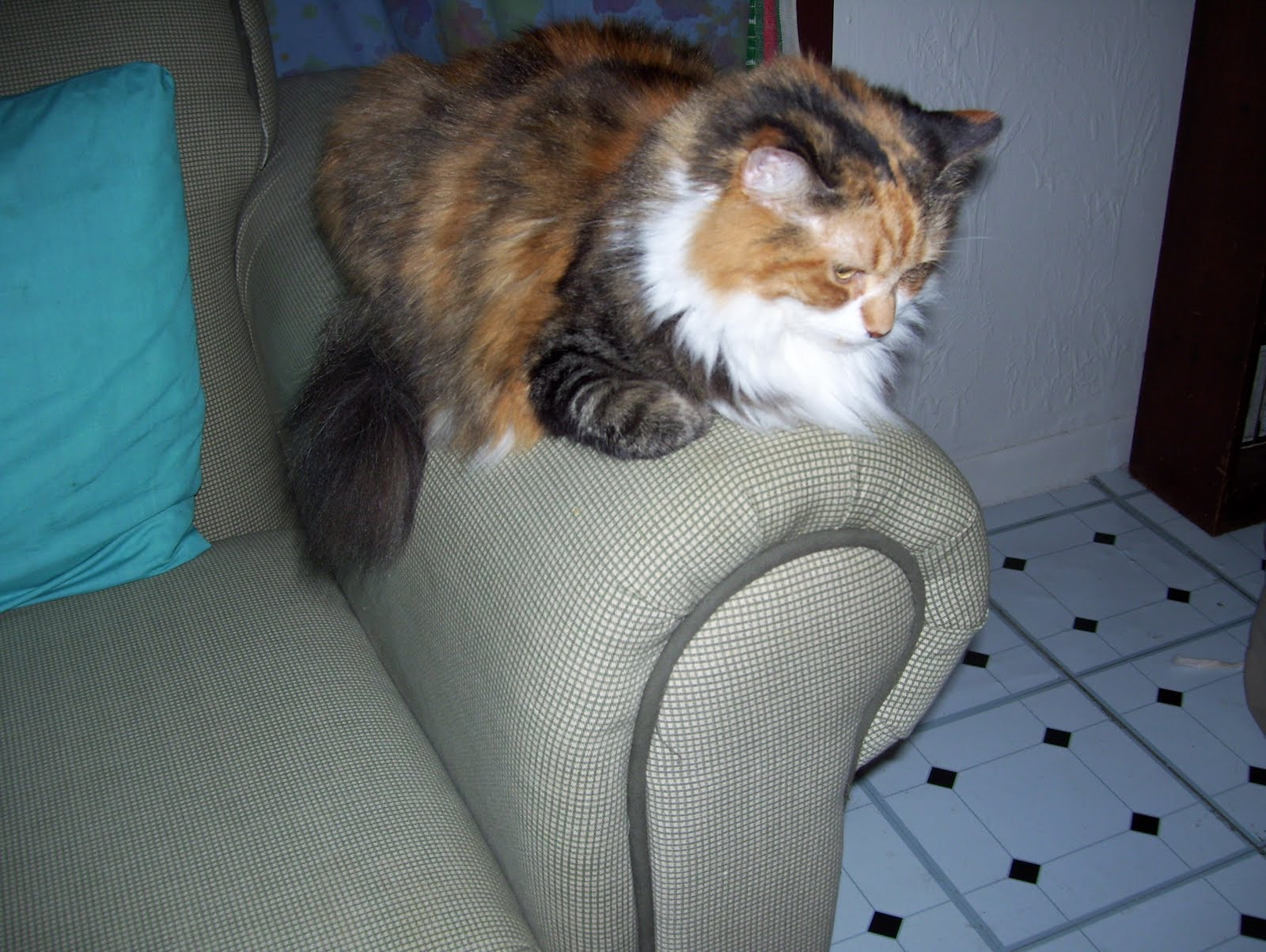 Muffin - photo in 2006