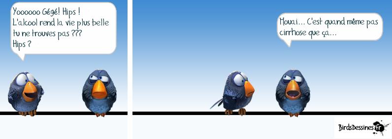 Le blogue du participe du c gep de jonqui re des oiseaux for Cegep jonquiere piscine