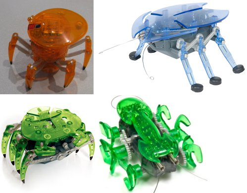 Orange narwhals strange and beautiful hexapods spider for Hex bugs fish