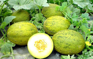 melon garden