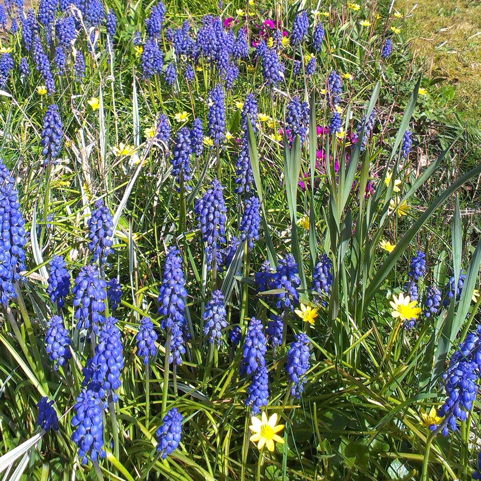 Blooming flowerbeds