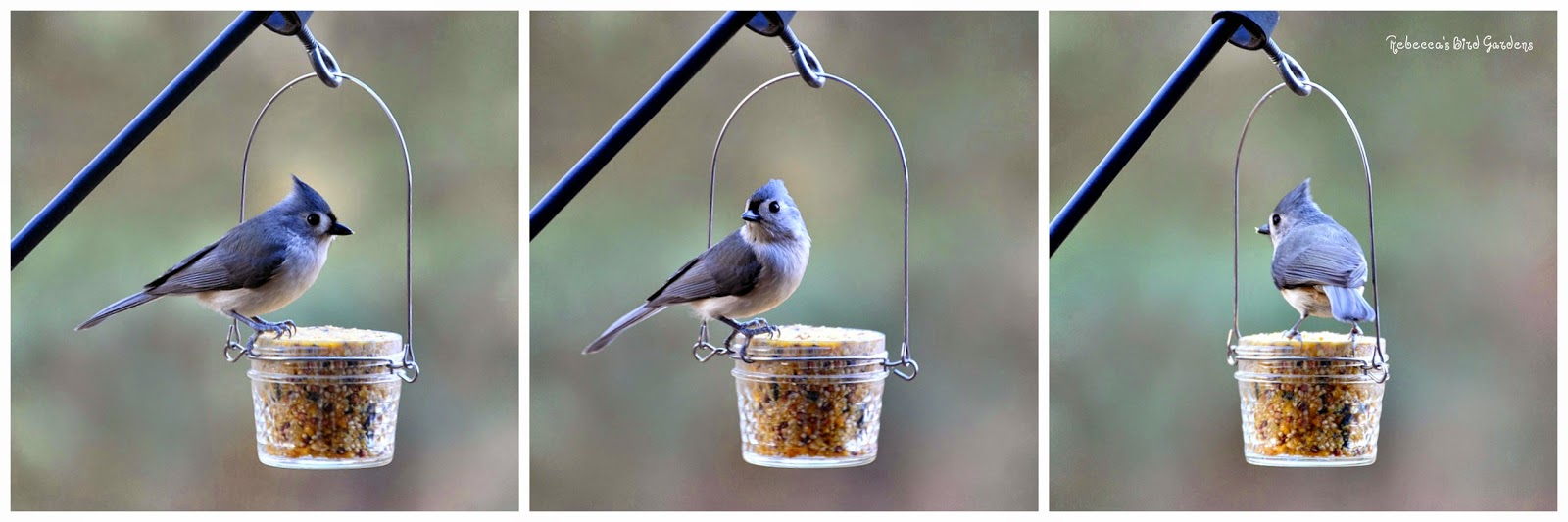 Rebecca 39 s bird gardens blog diy mason or jelly jar for How to make suet balls for bird feeders