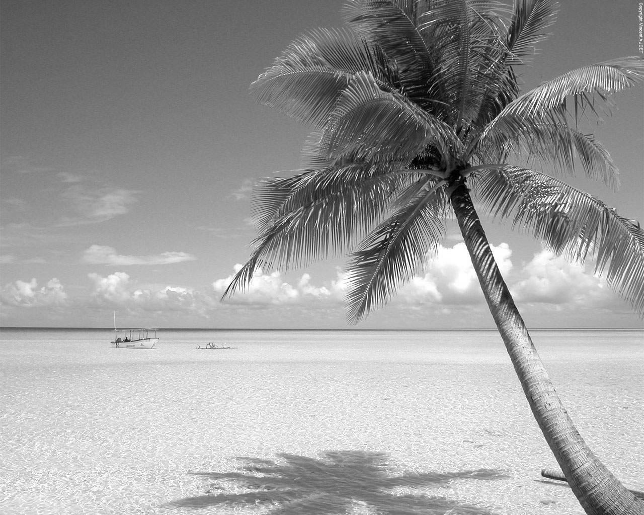 Buy White and black beach wallpapers picture trends