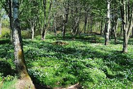 Välkommen till en blogg i gränslandet mellan trädgård och natur.