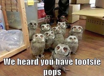 Bunch of baby owls say, we heard you have tootsie pops.
