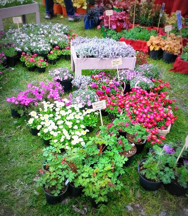 Food crafts giardini nel tempo fiori e piante a cesano - Giardini e fiori ...