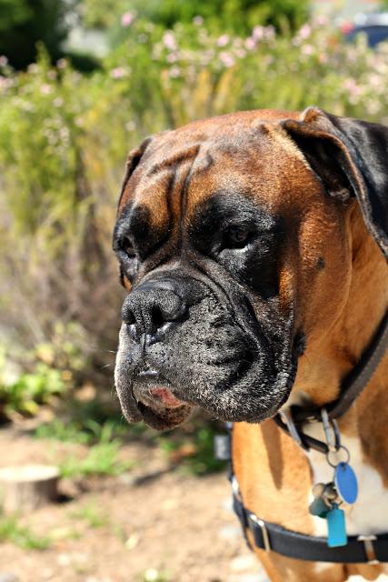 mars the dog  - wish list / catherine masi