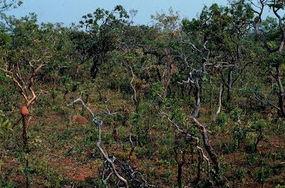 Vegetação típica do Cerrado