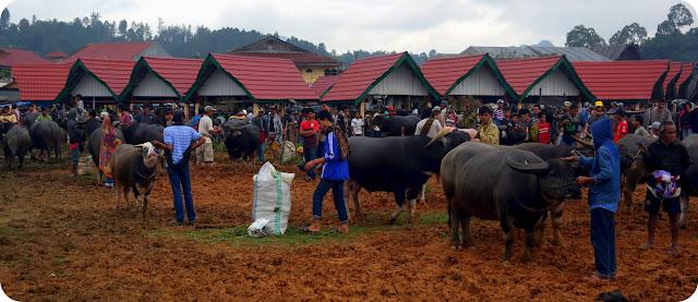 Pasar Kerbau Terbesar Di Indonesia