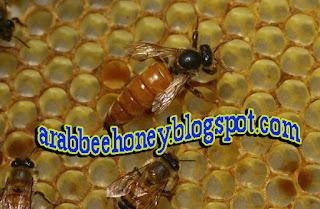 فيديو معجزة النحل