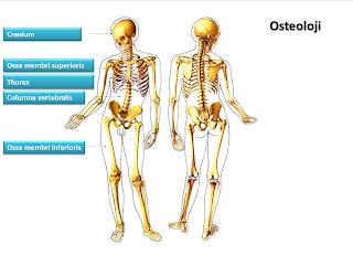 http://www.dosya.tc/server35/yEEgoX/Osteologie.pptx.html